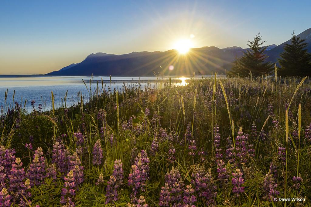Today's Photo Of The Day is Sunset on Turnagain Arm by Dawn Wilson. Location: Alaska.