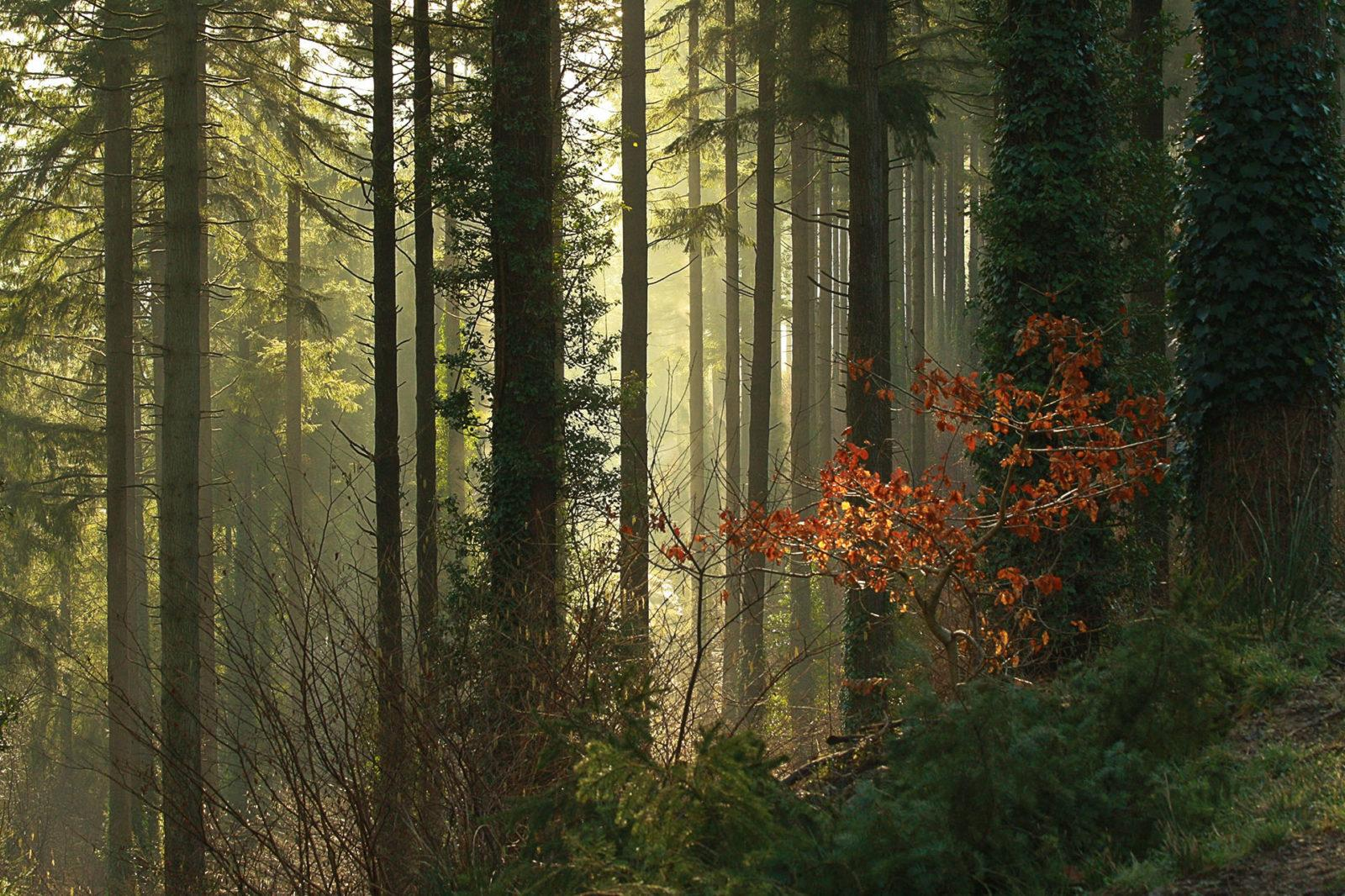 """Today's Photo Of The Day is """"Morning Light"""" by Dean Smith."""