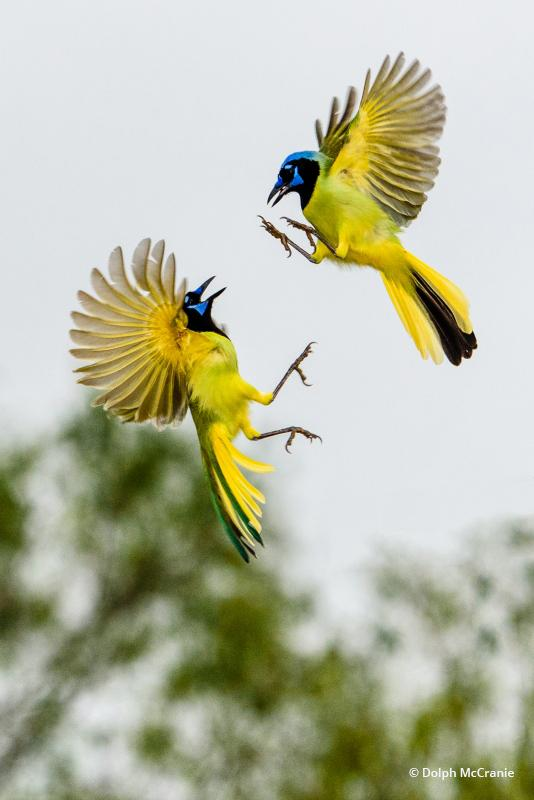 """Today's Photo Of The Day is """"Aerial Combat"""" by Dolph Mccranie. Location: Texas."""