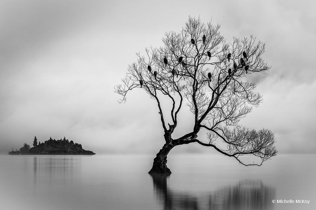 Today's Photo Of The Day is Birds of Lake Wanaka by Michelle McKoy. Location: New Zealand.