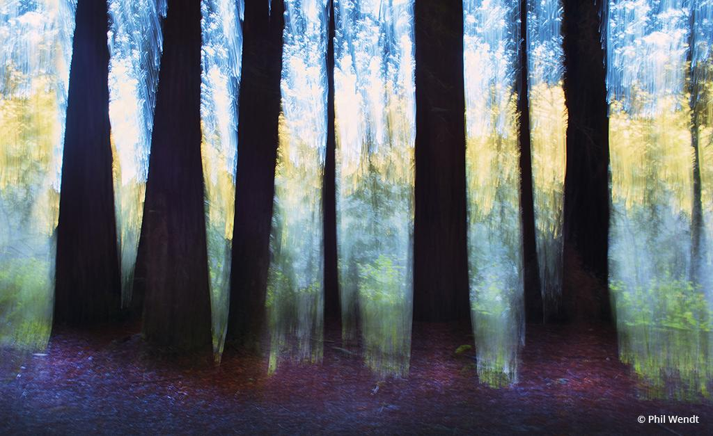 "Today's Photo Of The Day is ""Redwoods along the Gualala River"" by Phil Wendt. Location: California."