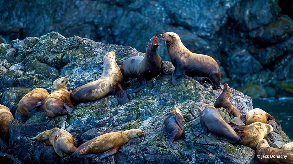 """Today's Photo Of The Day is """"King of the Hill"""" by Jack Donachy. Location: Kenai Fjords National Park, Alaska."""