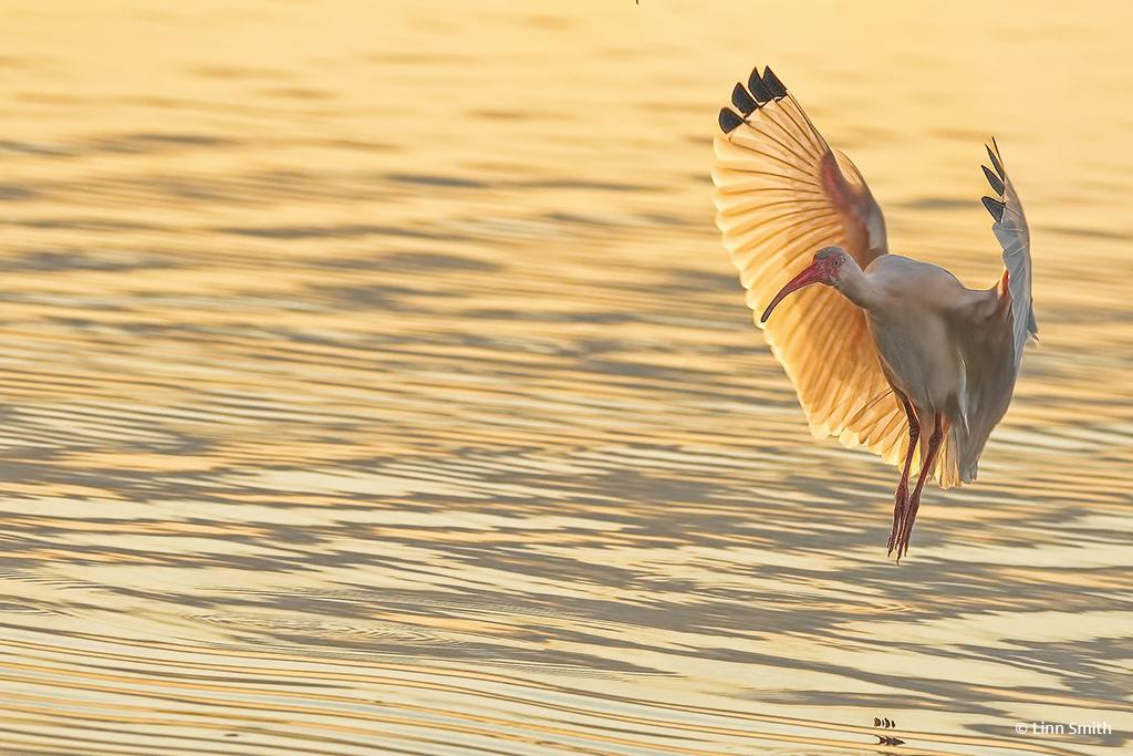"Today's Photo Of The Day is ""Full Flaps Down"" by Linn Smith. Location: Florida."