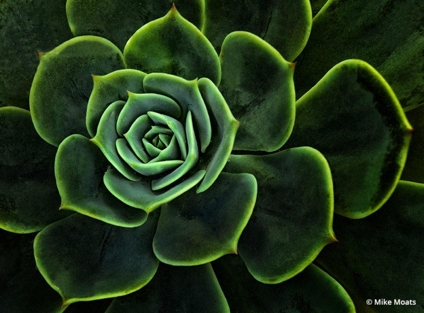Succulents make great subjects for macro photography