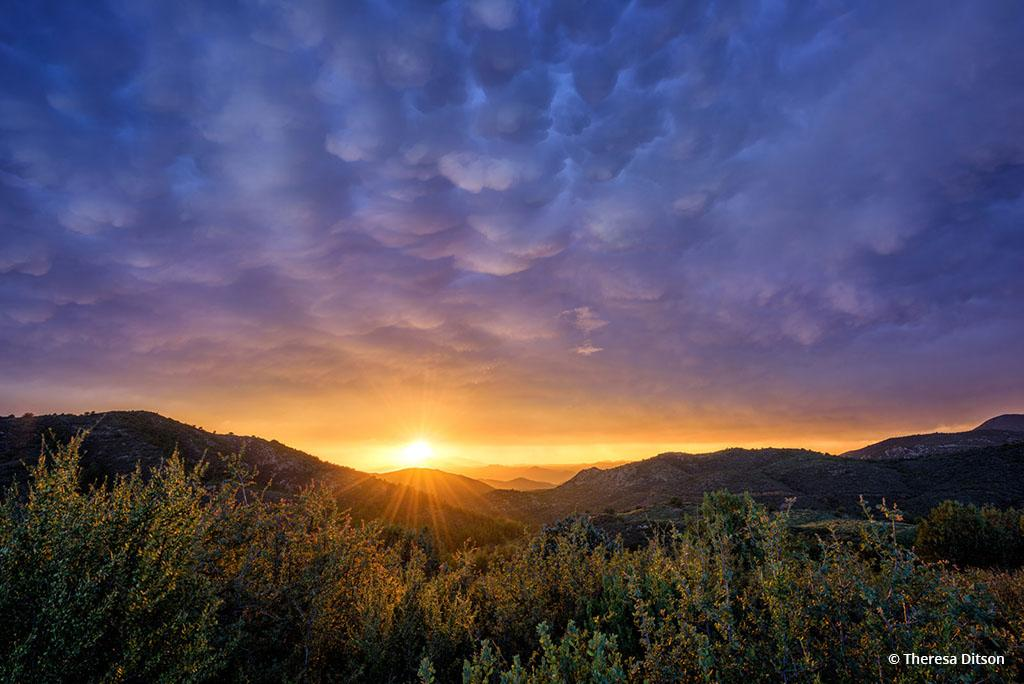 "Today's Photo Of The Day is ""Mammatus Sunset"" by Theresa Ditson. Location: Prescott, Arizona."