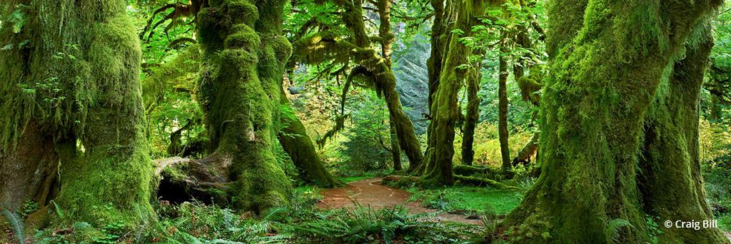 "Today's Photo Of The Day is ""Hall of Mosses"" by Craig Bill. Location: Washington."