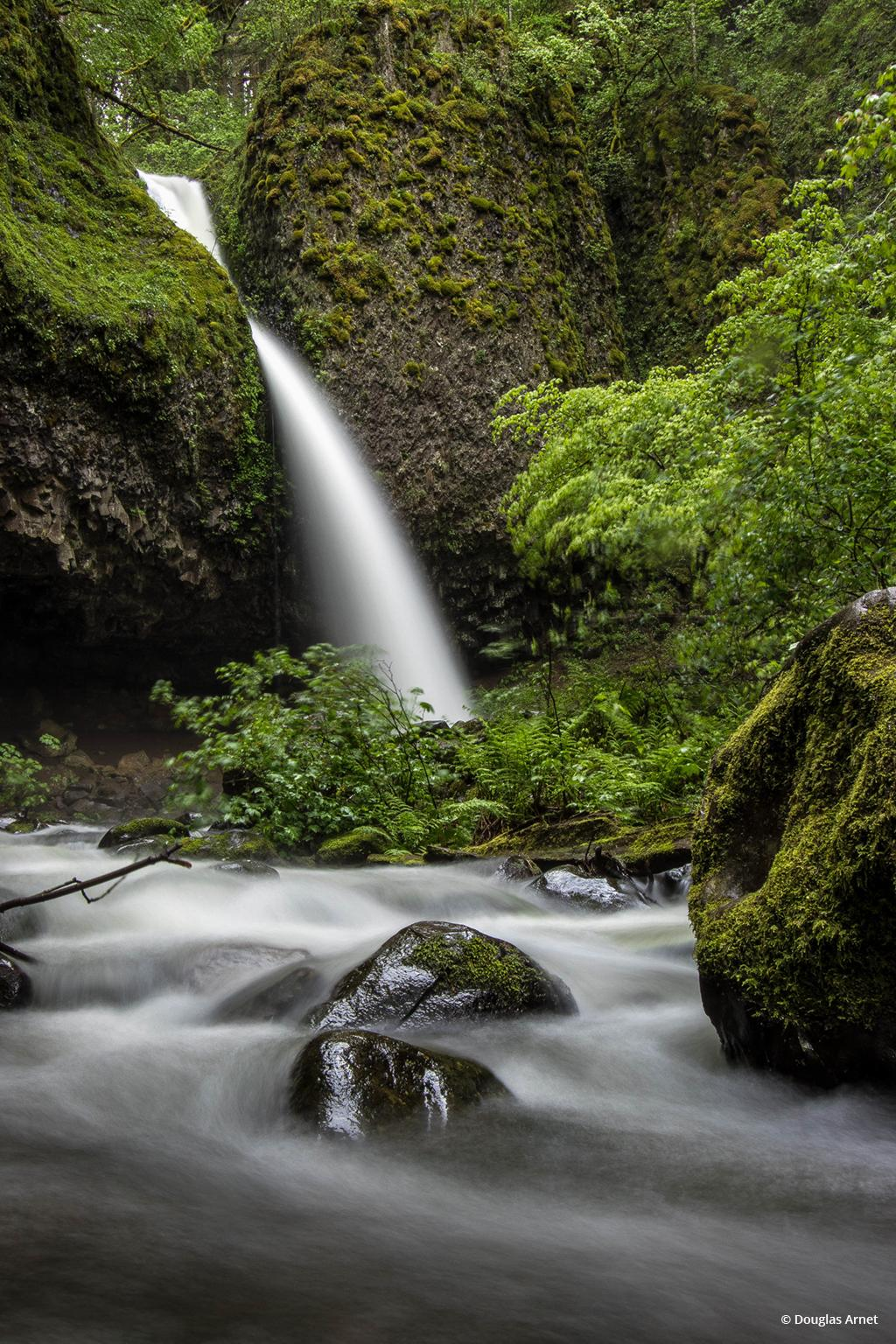 """Today's Photo Of The Day is """"Ponytail"""" by Douglas Arnet. Location: Columbia River Gorge, Oregon."""