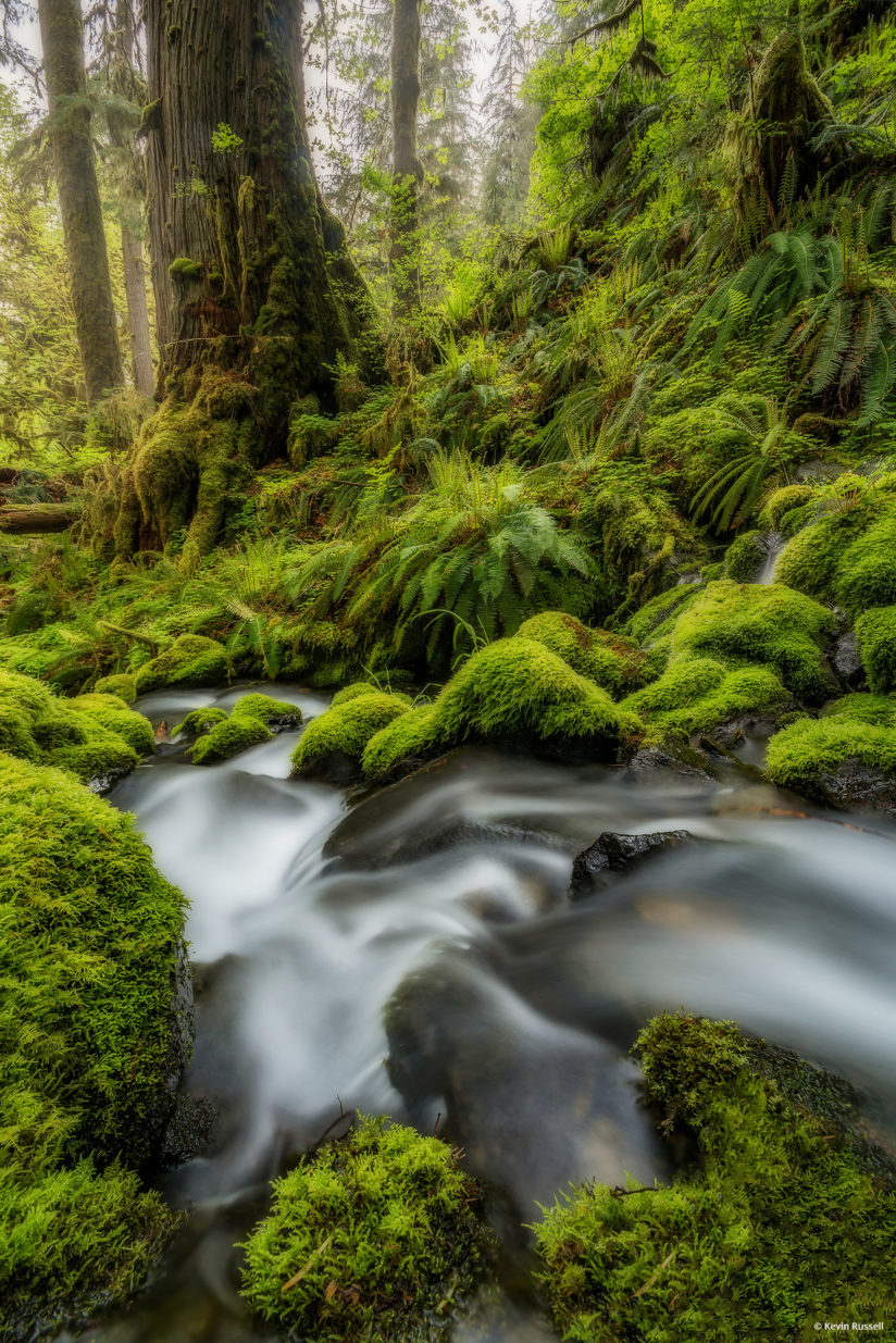 """Today's Photo Of The Day is """"Quinault Flows"""" by Kevin Russell. Location: Olympic National Park, Washington."""