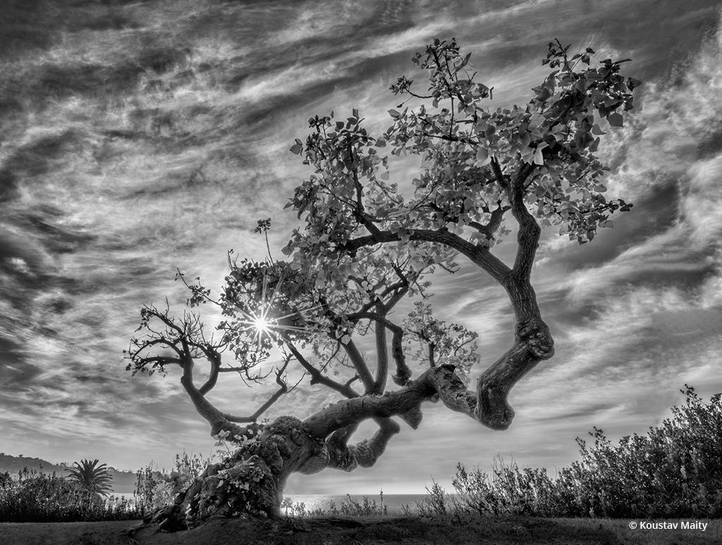 "Today's Photo Of The Day is ""Coral Tree"" by Koustav Maity. Location: La Jolla, California."