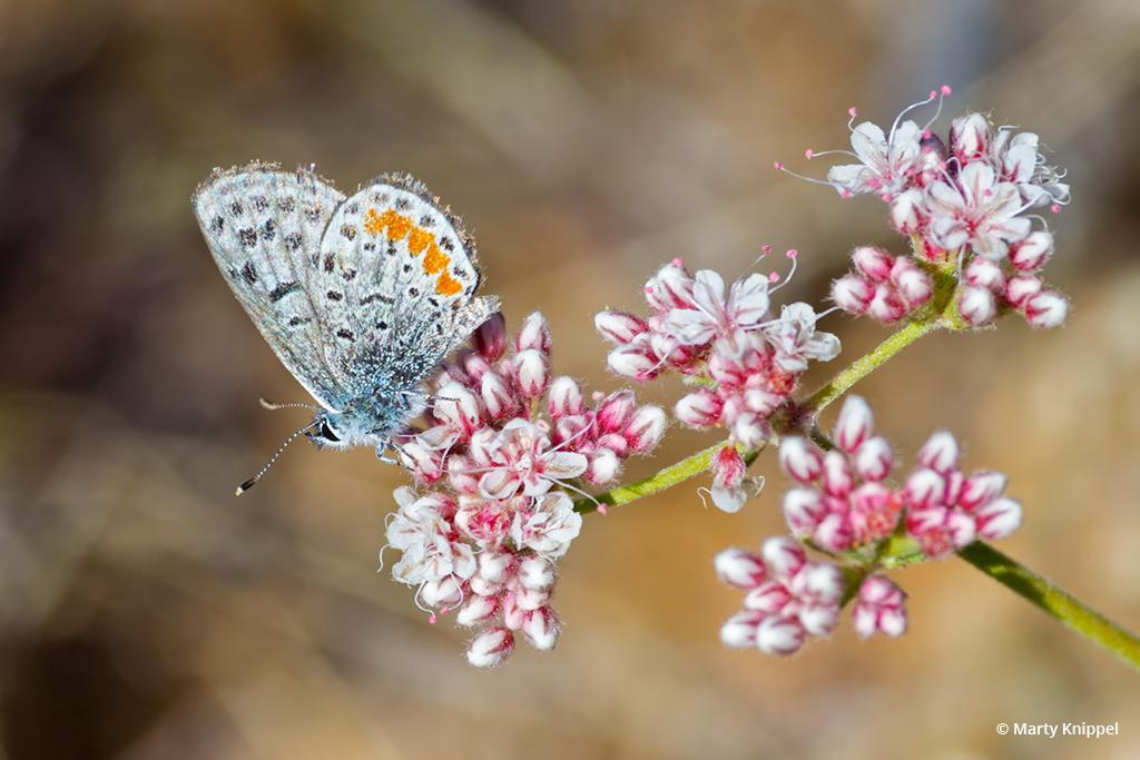"Today's Photo Of The Day is ""Butterfly and Bloom in the Desert"" by Marty Knippel. Location: Arizona."