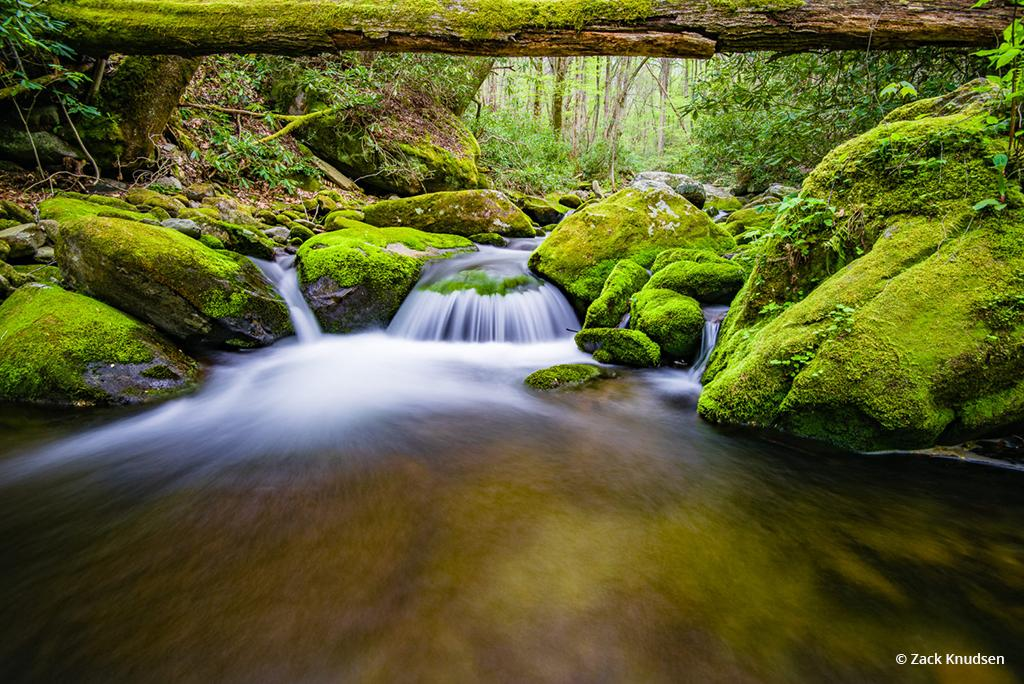 "Today's Photo Of The Day is ""Come On In (The Water is Fine)"" by Zack Knudsen. Location: Roaring Fork Motor Nature Trail, Gatlinburg, Tennessee."