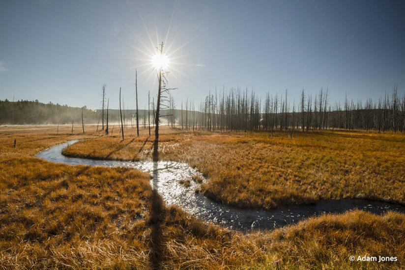 Morning sunburst over ghost trees, Yellowstone