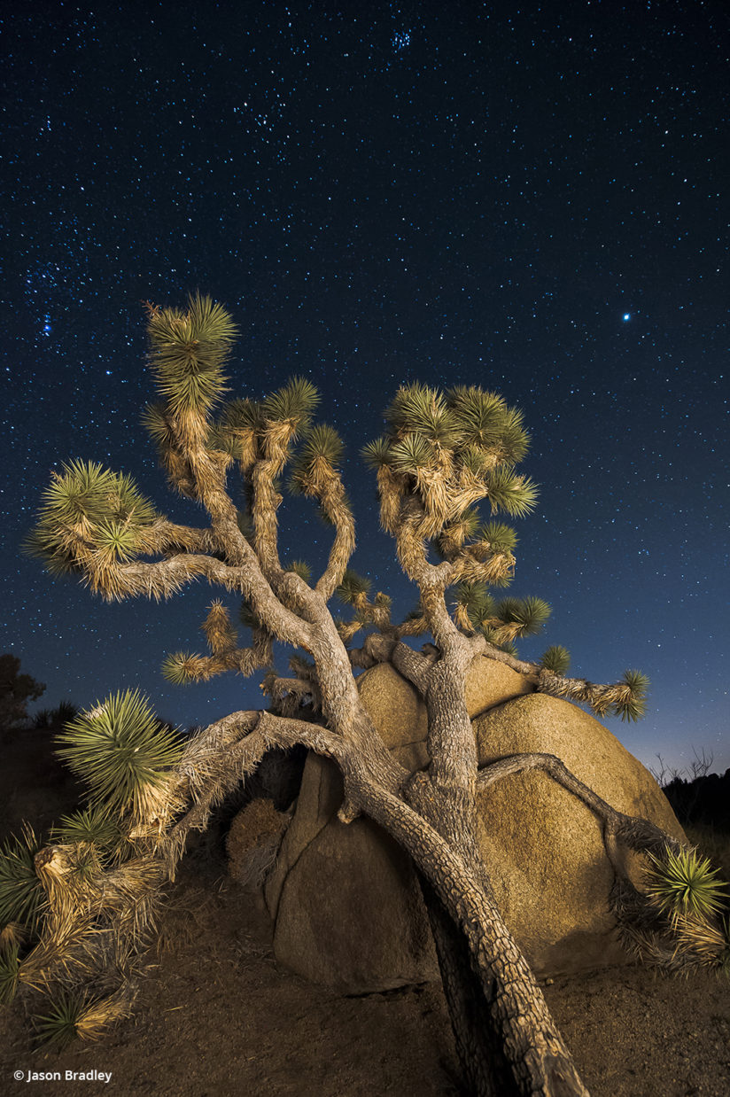 Jumbo Rocks at Joshua Tree