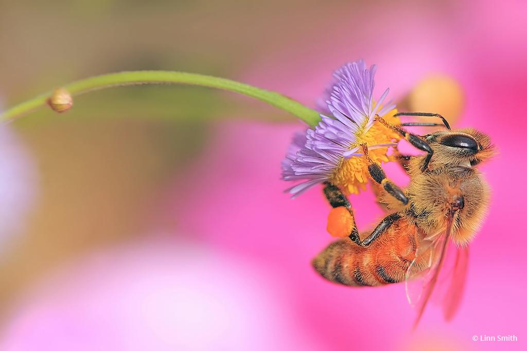 """Today's Photo Of The Day is """"Bee Benefits"""" by Linn Smith. Location: Florida."""