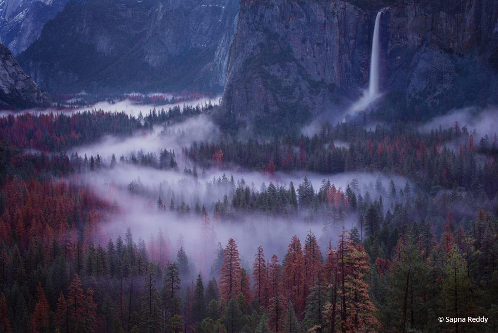 """Today's Photo Of The Day is """"Flow"""" by Sapna Reddy. Location: Yosemite National Park, California."""