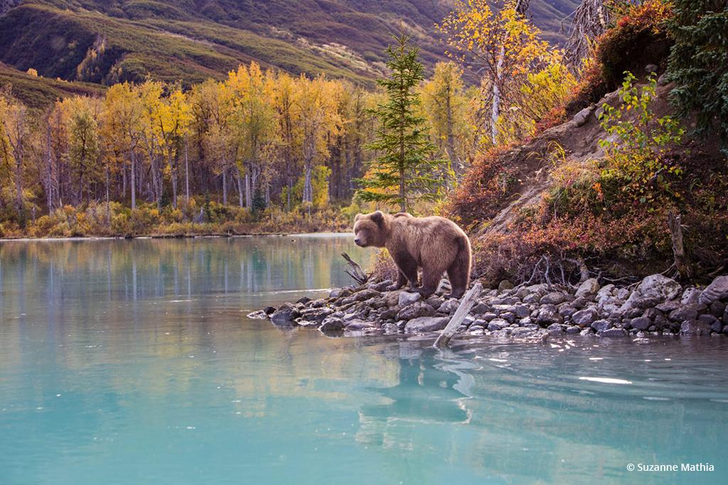 """Today's Photo Of The Day is """"Looking Back"""" by Suzanne Mathia. Location: Suzanne Mathia. Lake Clark National Park, Alaska."""