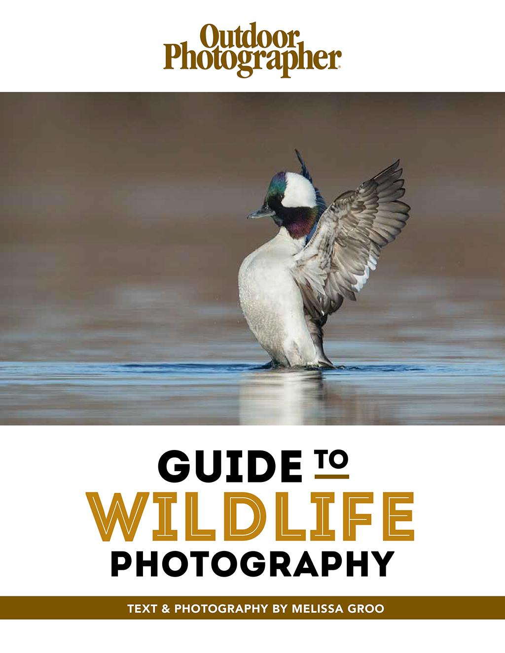 Guide To Wildlife Photography