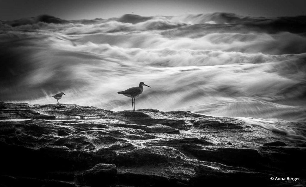 "Today's Photo Of The Day is ""Waiting for the Big Wave"" by Anna Berger. Location: Florida."