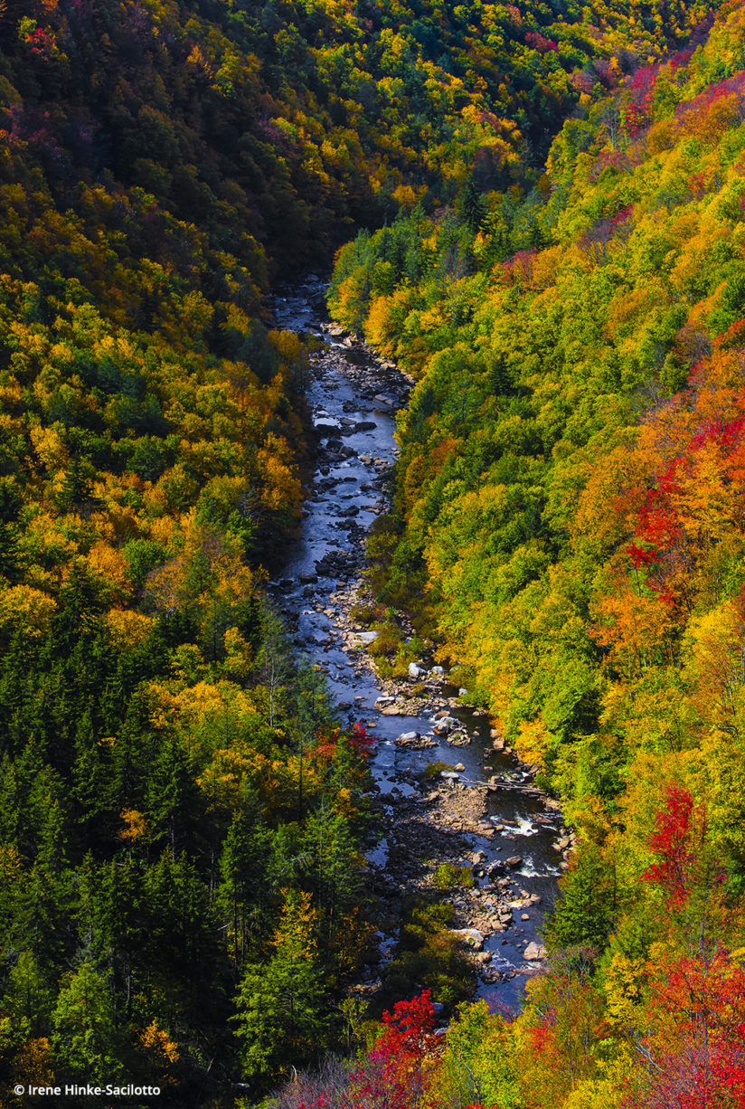 Fall Color In West Virginia: Blackwater Canyon