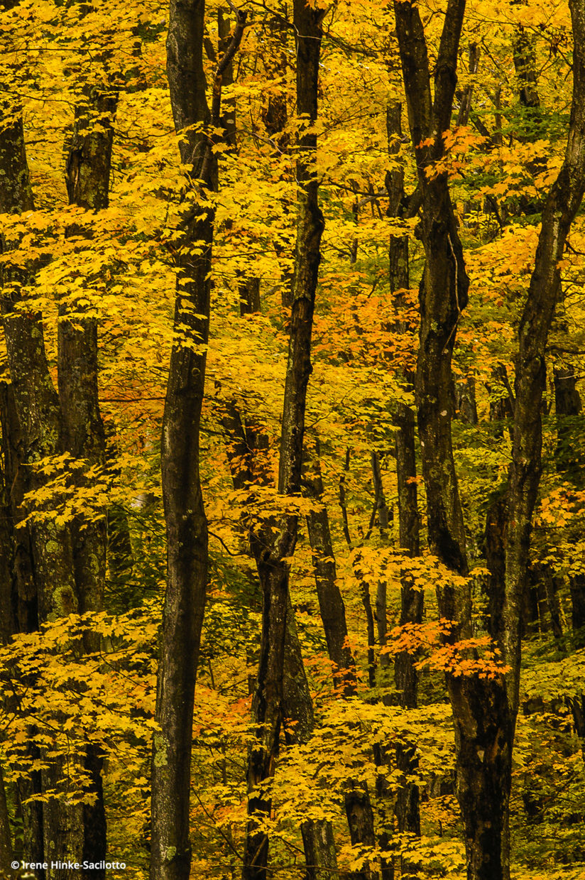 Fall color in West Virginia: Canaan Valley