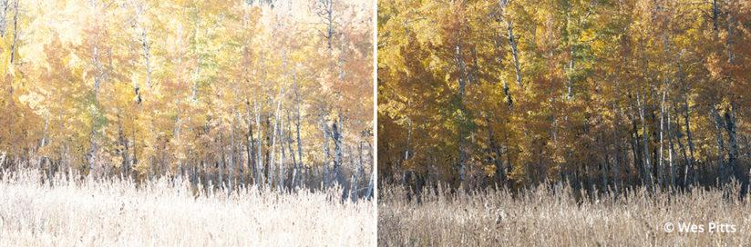 Processing for neutral fall color