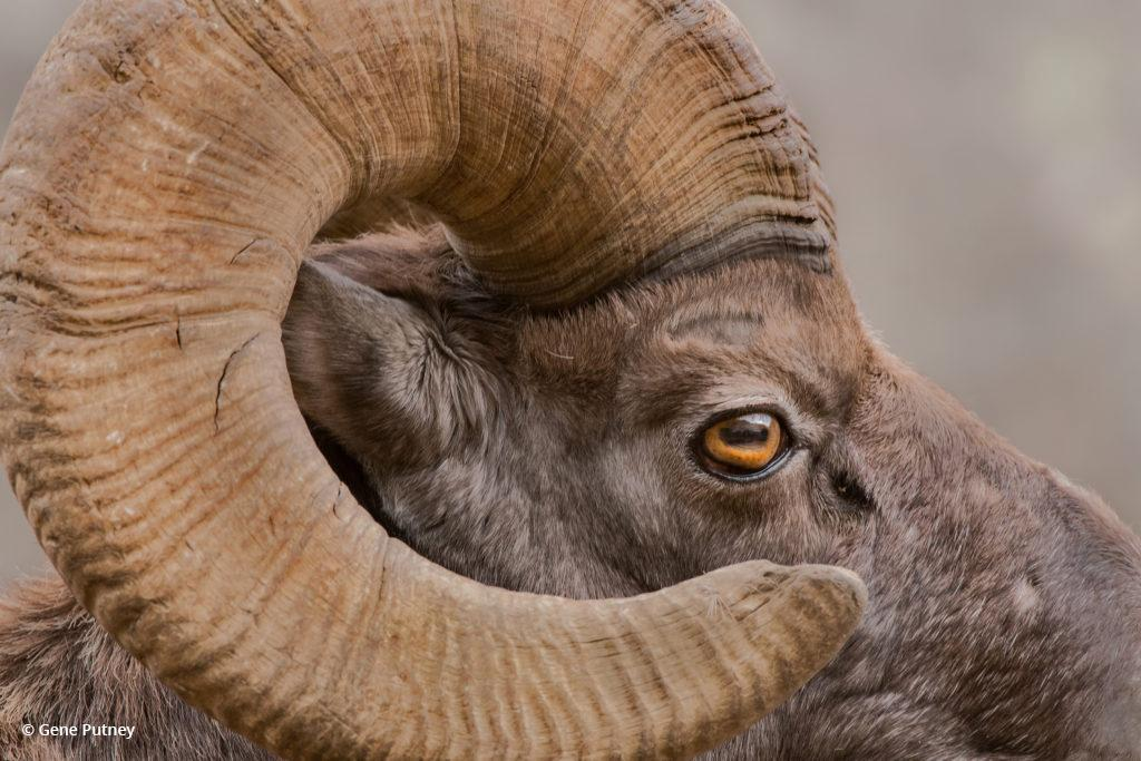 """Today's Photo Of The Day is """"Eye-Catching"""" by Gene Putney. Location: Waterton Canyon, Colorado."""