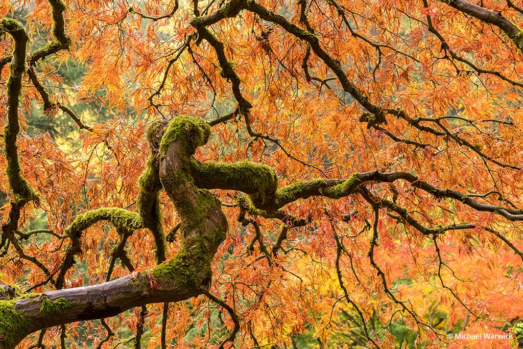 Fall Color Assignment Winner Michael Warwick
