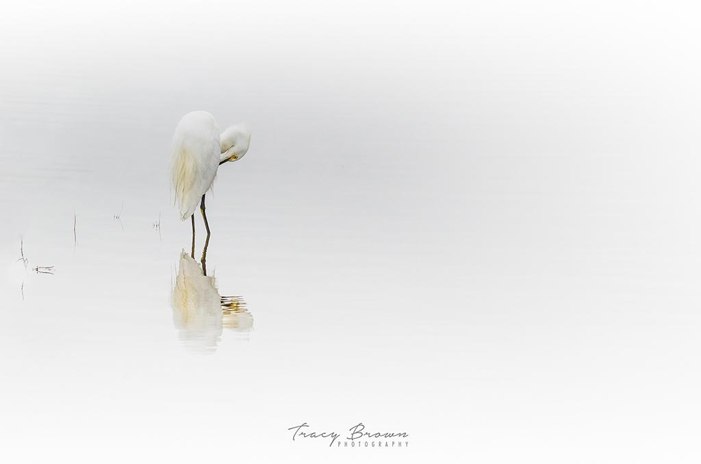 """Today's Photo Of The Day is """"Foggy Morning"""" by Tracy Brown. Location: Sacramento National Wildlife Refuge, California."""