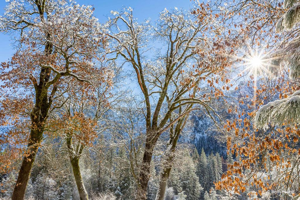"Today's Photo Of The Day is ""El Capitan Meadow Winter Tapestry"" by Beth Young. Location: Yosemite National Park, California."