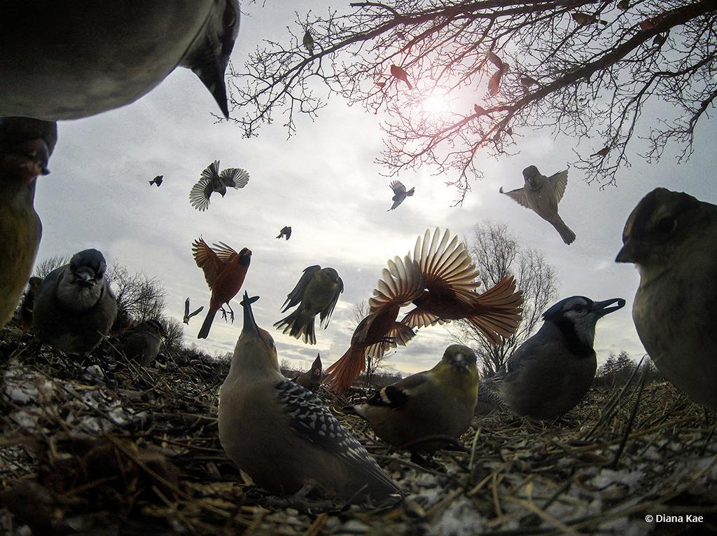 """Today's Photo Of The Day is """"Seeds For EVERYONE"""" by Diana Kae. Location: Kansas City, Missouri."""
