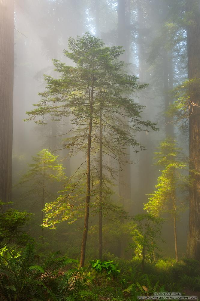 "Today's Photo Of The Day is ""Room to Grow"" By Michael Ryan. Location: Del Norte Coast Redwoods State Park, California."