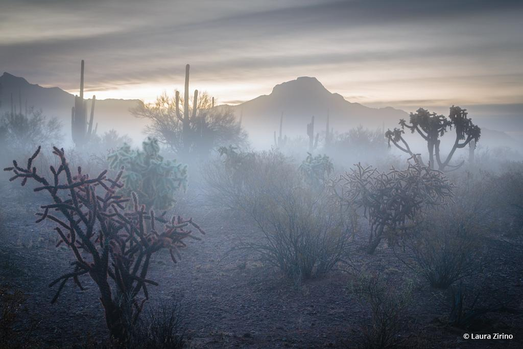 """Today's Photo Of The Day is """"Dawn Emerges From the Fog"""" by Laura Zirino."""