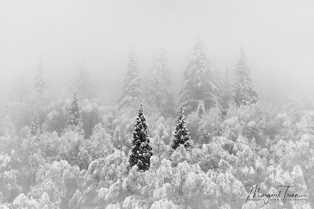 """Today's Photo Of The Day is """"Snowy Sentinels by Margaret Trenn. Location: British Columbia, Canada."""