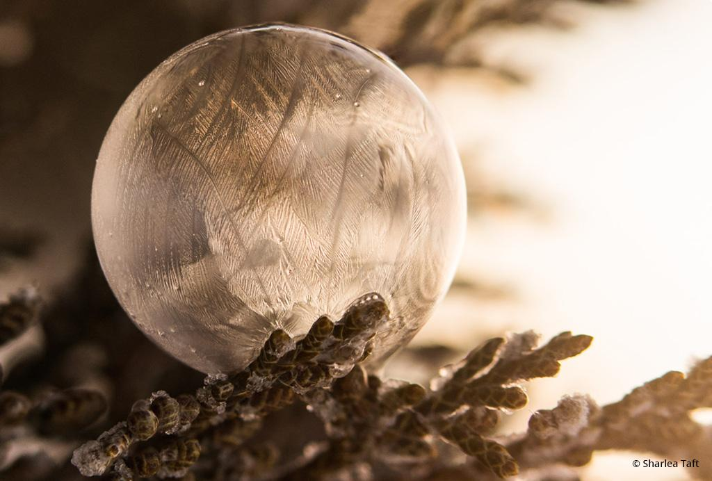 """Today's Photo Of The Day is """"Frosty Bubble"""" by Sharlea Taft. This frozen soap bubble on a tree branch was shot by Taft in Nevada."""