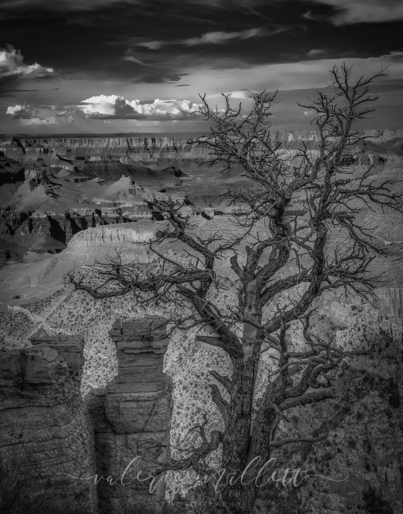 "Today's Photo Of The Day is ""Into The Grand"" by Valerie Millett. Location: Grand Canyon National Park, Arizona."