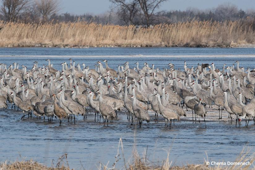 Spring Is In Air Cranes Are Returning >> Photographing The Sandhill Crane Migration Outdoor Photographer