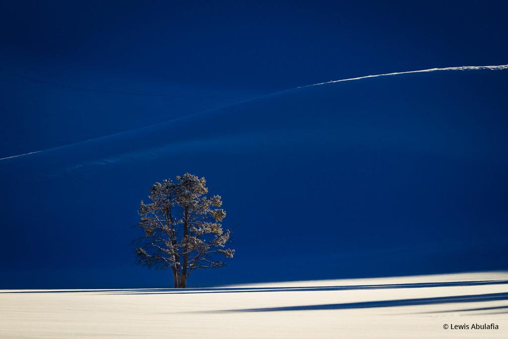 "Congratulations to Lewis Abulafia for winning the recent Telephoto Landscapes Assignment with the image, ""Solitary Tree in Yellowstone."""