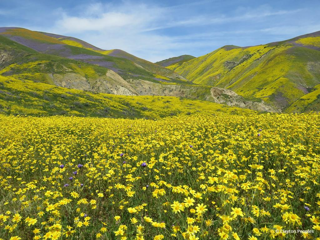 """Today's Photo Of The Day is """"Yellow Fields and Hills"""" by Clayton Peoples. From the 2017 """"super bloom"""" in Carrizo Plain National Monument, California."""