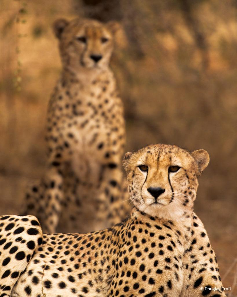 """Today's Photo Of The Day is """"Brothers"""" by Douglas Croft. Location: Kruger National Park."""