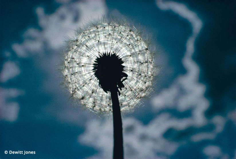 More than one right answer led to this incredible image of a dandelion puff ball.