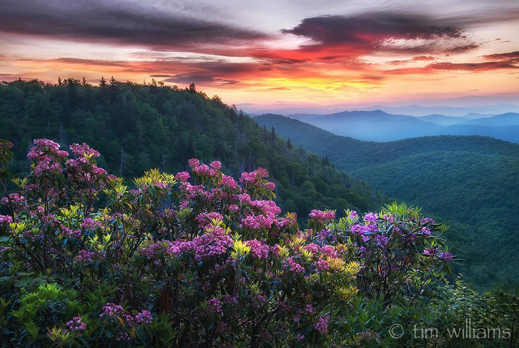 "Today's Photo Of The Day is ""Quiet Vibrance"" by Tim Williams. Location: Blue Ridge Parkway, North Carolina."