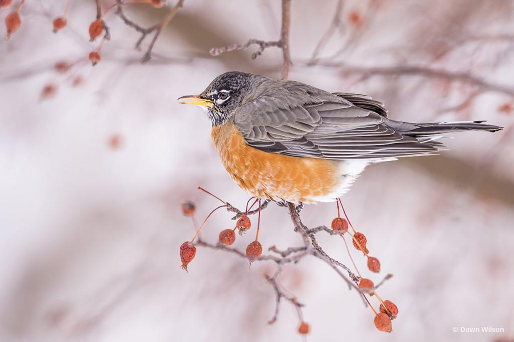 Photo By Last Gasp Of Winter Assignment Winner Dawn Wilson