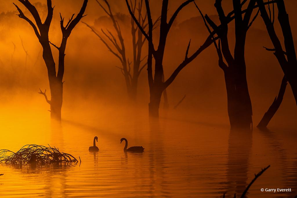 Swan Lake By Garry Everett