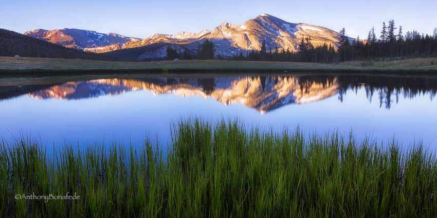 """Today's Photo Of The Day is """"Meadow Sunrise"""" by Michael Bonafede. Location: Yosemite National Park, California."""