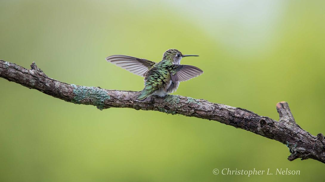 """Today's Photo Of The Day is """"Hummingbird Yoga"""" by Christopher Nelson. Location: Cookeville, Tennessee."""