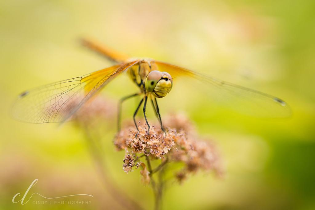 "Today's Photo Of The Day is ""Dragonfly Friend"" by Cindy L Photography."