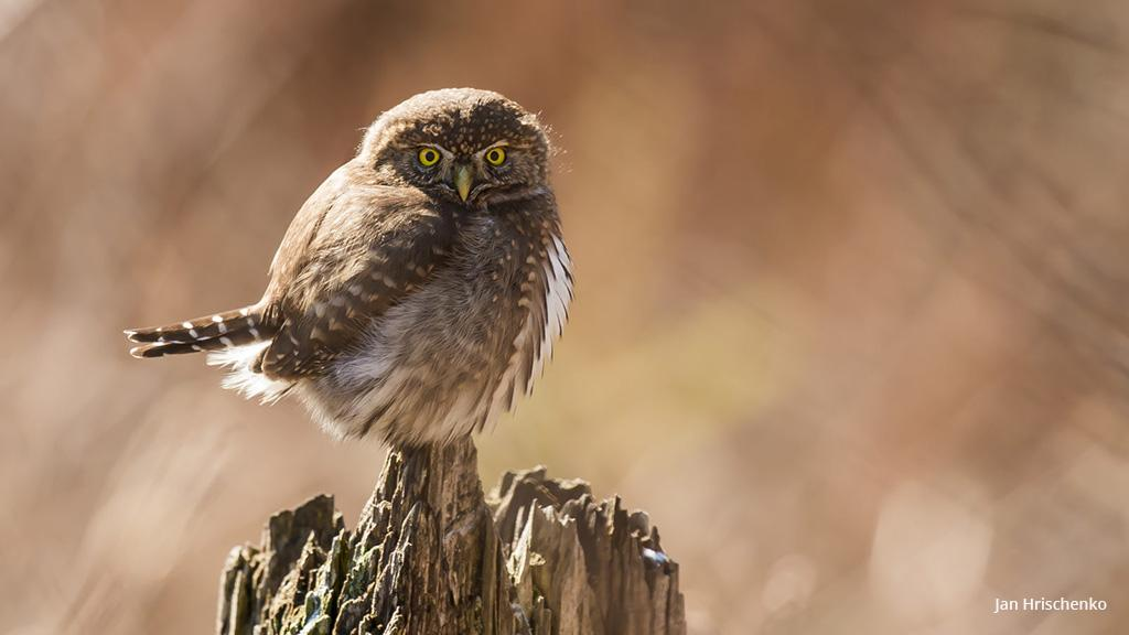 """Today's Photo Of The Day is """"You Scared Me"""" by Jan Hrischenko. Location: British Columbia, Canada."""