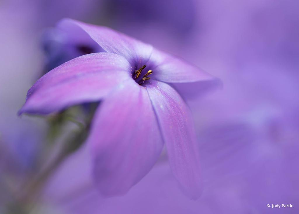 "Photo Of The Day: ""Purple Pleasure"" by Jody Partin. Location: Huntley Meadows Park, Virginia."