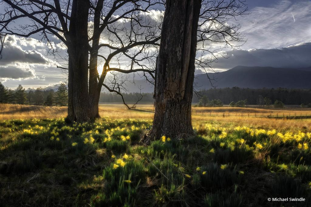 "Today's Photo Of The Day is ""Wildflowers in Morning Sun"" by Michael Swindle. Location: Great Smoky Mountain National Park, Tennessee."