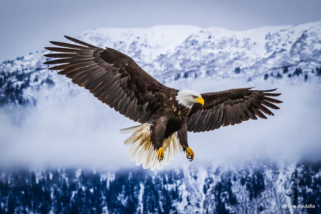 "Today's Photo Of The Day is ""American Bald Eagle"" by Lew Abulafia. Location: Homer, Alaska."